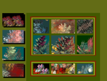 gallery 2 (15).png