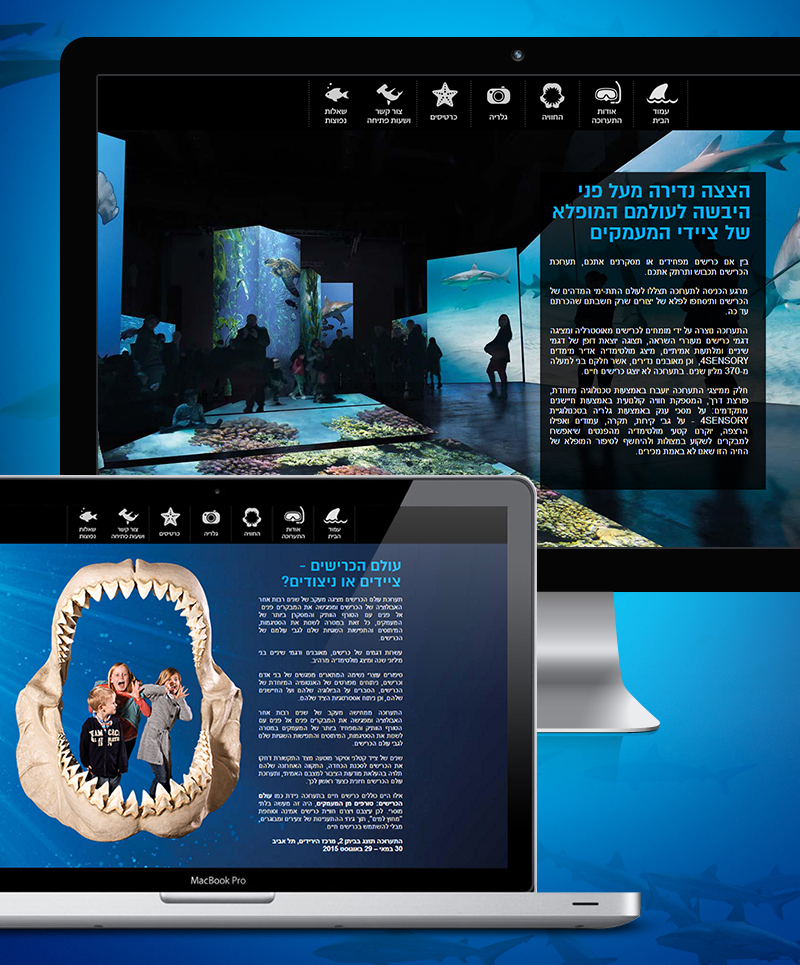 sharks-800_02