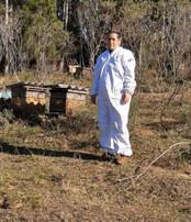A importância do trabalho das abelhas para preservação da vida