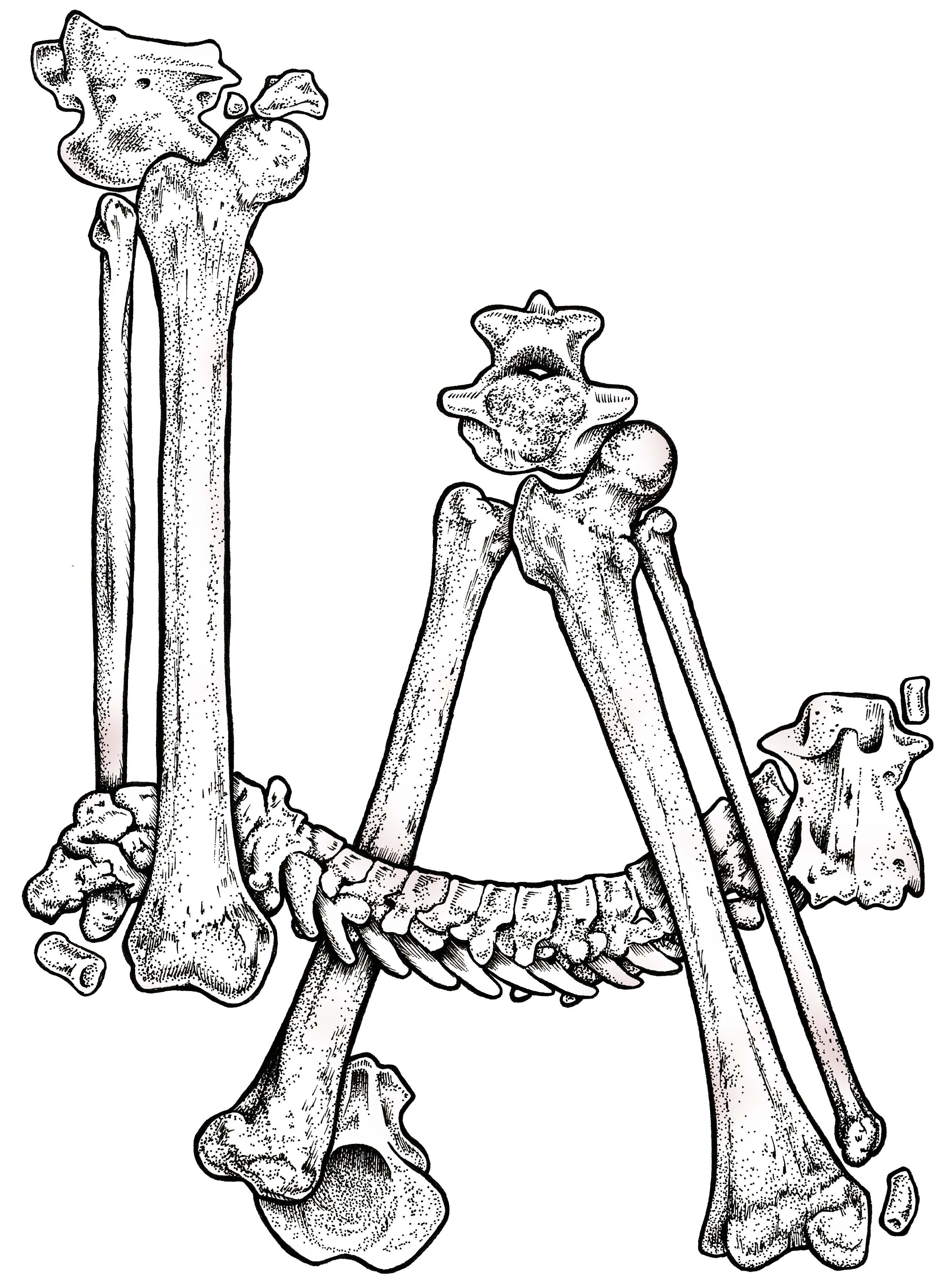 LA Bones