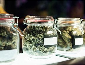 cannabis-in-jars-1536x1189.jpg