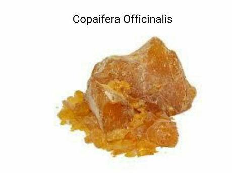Copaiba_ağaç_reçinesi___tropical_ik