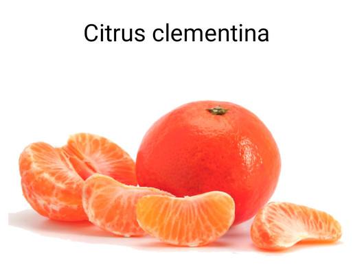 clementine kırmızı mandalina