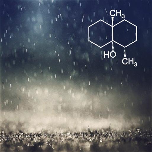 Parfümlerde Yağmur kokusu / Toprak kokusu