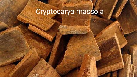 Massoia ağacı _ Endonezya gibi Tropik ik