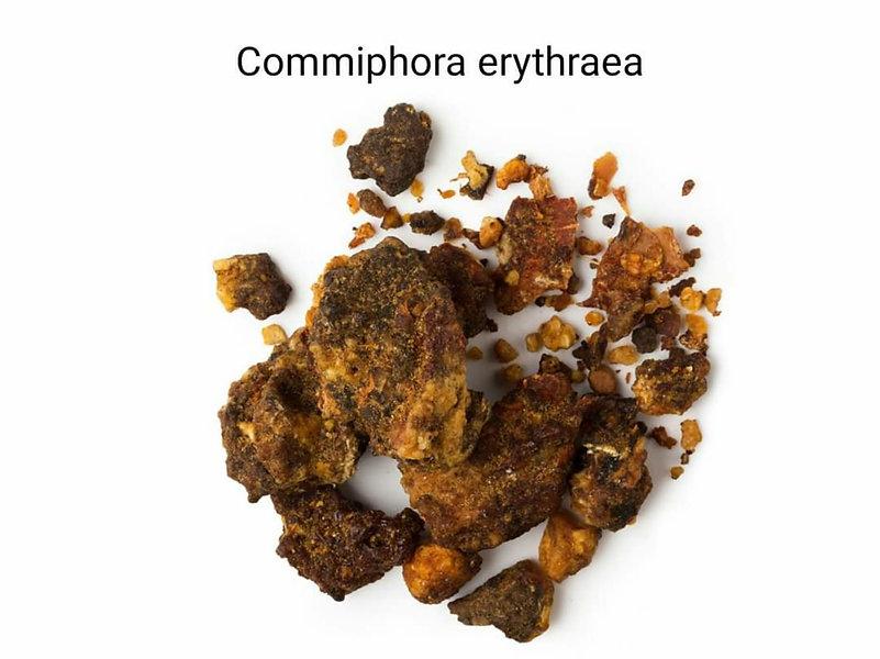 Opoponax ağaç reçinesi _ parfümlerde sık