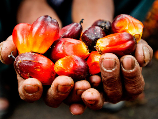 The Problem On Our Hands: How Palm Oil Harms The Environment