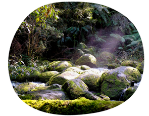 Forest bathing…an all encompassing therapy