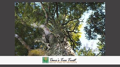 tane's Tree Trust.jpg