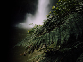 Footprints in the Ferns