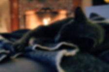 animal-animal-photography-blanket-824161