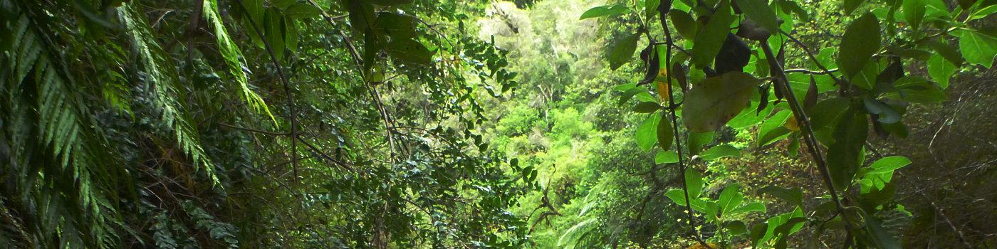 bush 1.jpg