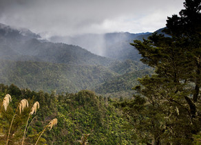 Body and soul: the drive to breathe new life into NZ forests