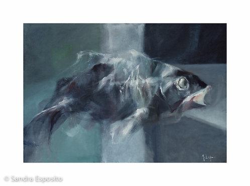 Pesce in luce