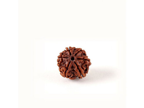 Shanmukhi Rudraksha Bead for Children (Six Faced) (Can not be shipped)