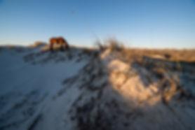 Wild stallion grazing the dunes of Cumberland