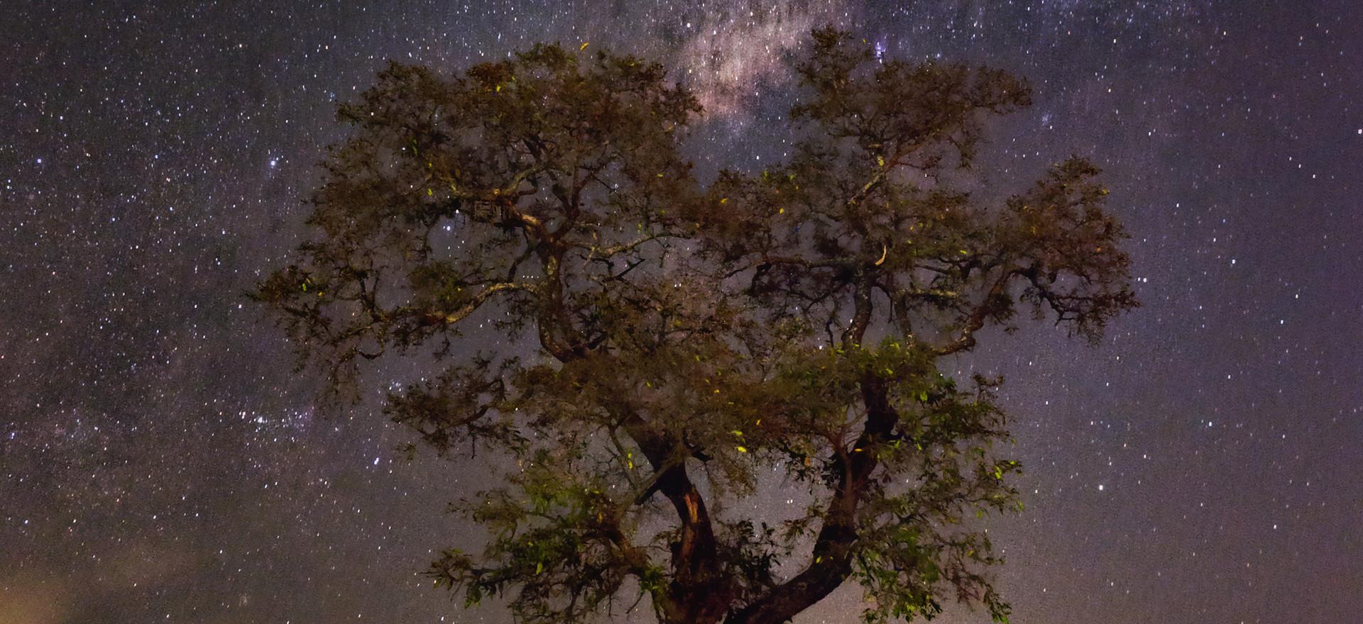 Jackalberry Moonset