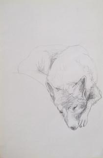 Untitled (Schäfer) 2009