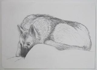 Dog Drawing 29 Nov. 2009