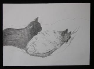 Black & Grey Cat 28 Nov. 2009