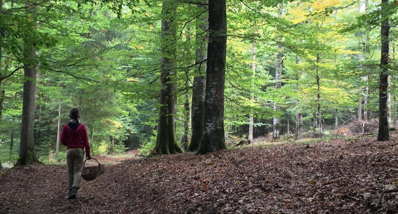 mushroom walk in the Vosges