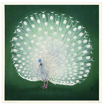40x40 cm Peacock Print