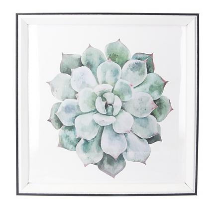 30x30cm Echeveria Framed Print