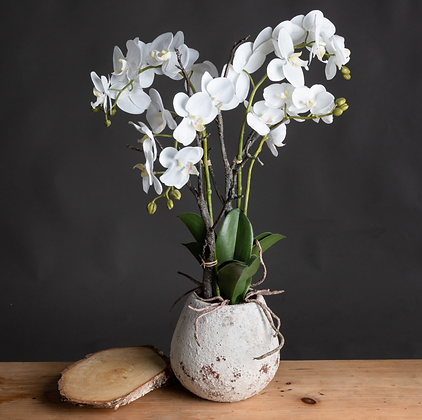 White Orchid in Stone Pot