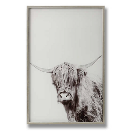 Highland Cow Left Facing Image