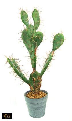 60cm Cactus In Pot