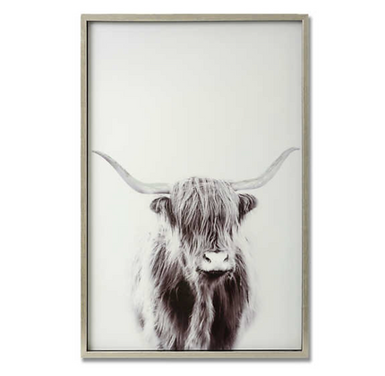 Highland Cow Right Facing Image