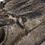 Thumbnail: Decorative Faux Croc Head
