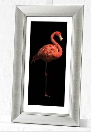 60x30cm Silver Framed Flamingo Print I