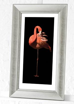 60x30cm Silver Framed Flamingo Print II