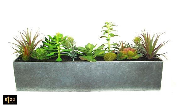 50cm Succulents In Trough