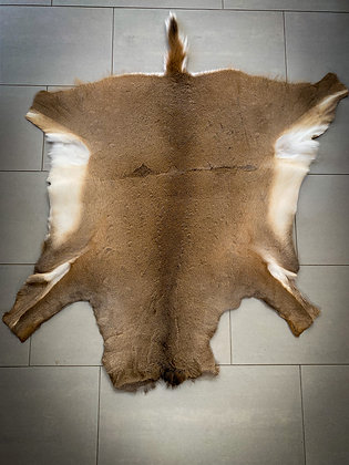 White Tailed Deer Hide