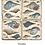 Thumbnail: Studio Vertu Cork Backed Trivets