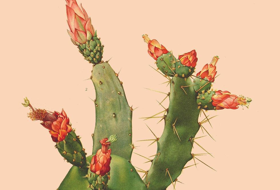 Cactus test