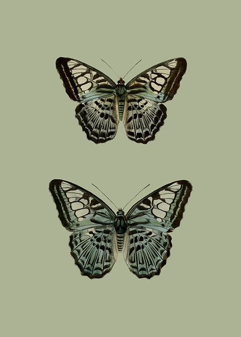 Green pair of butterflies
