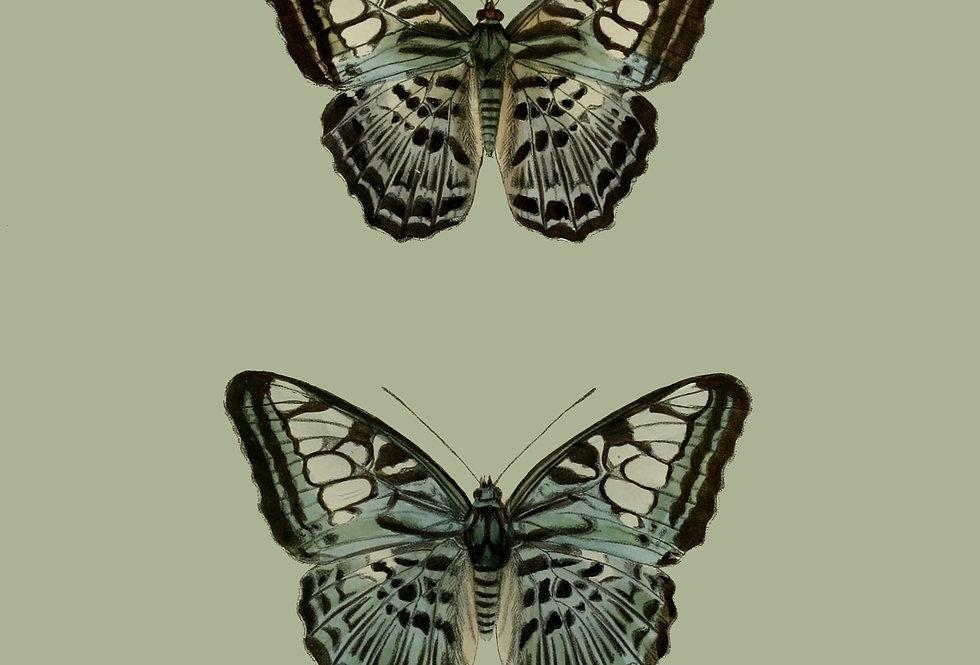 Green pair of butterflies