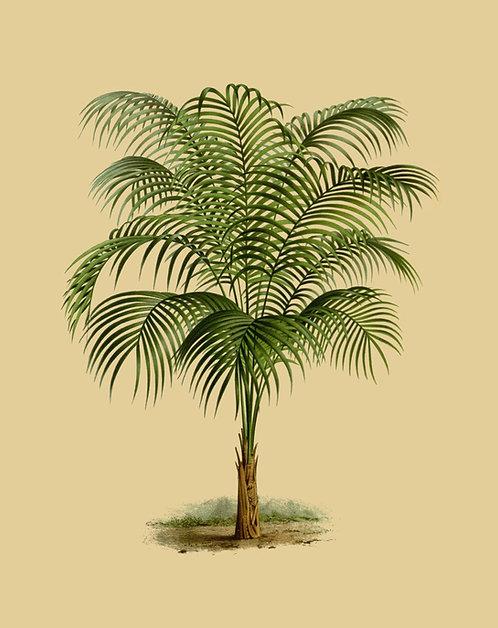 Green palmtree