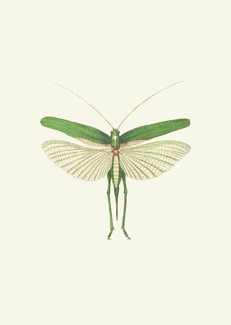 Grasshopper green