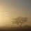 Thumbnail: The beginning
