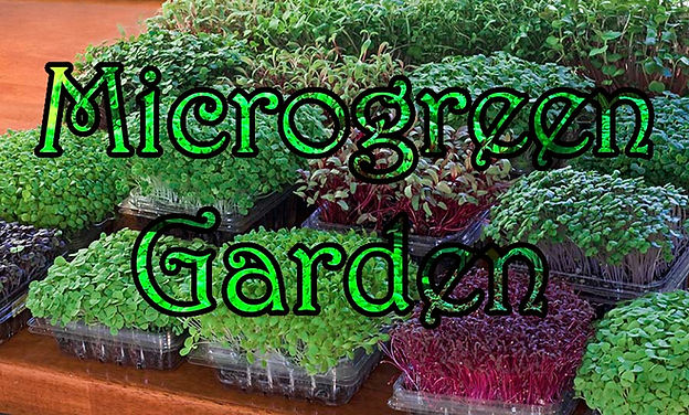 Microgreen Garden by Mark Mathew Braunstein