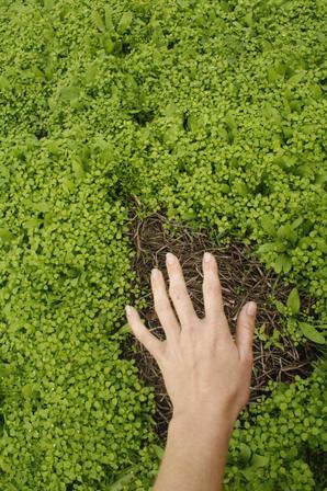 la mano sana la tierra, la terre guérit