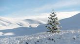 Nieve en Malalcahuello. fjn003