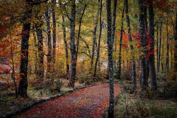 Camino en el bosque. fjn030