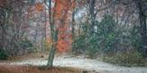 Nieve en Araucanía. fjn033