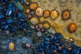 Baja Mar. fjn023