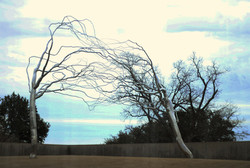 MoMA, Fort Worth - Photo Essay by Amit Khanna (13).JPG